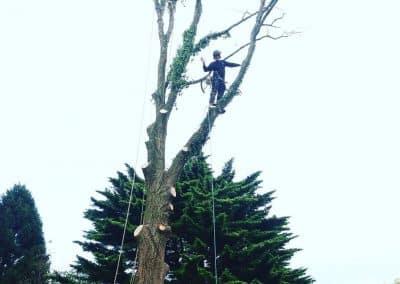 Felling trees